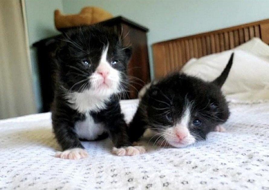 Ces chatons jumeaux ne se quittent jamais après avoir été trouvés ensemble dans une tempête