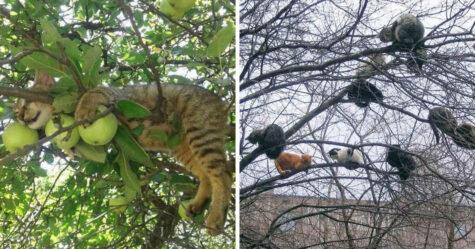 Ces chats ont parfaitement maîtrisé l'art de faire la sieste dans les arbres