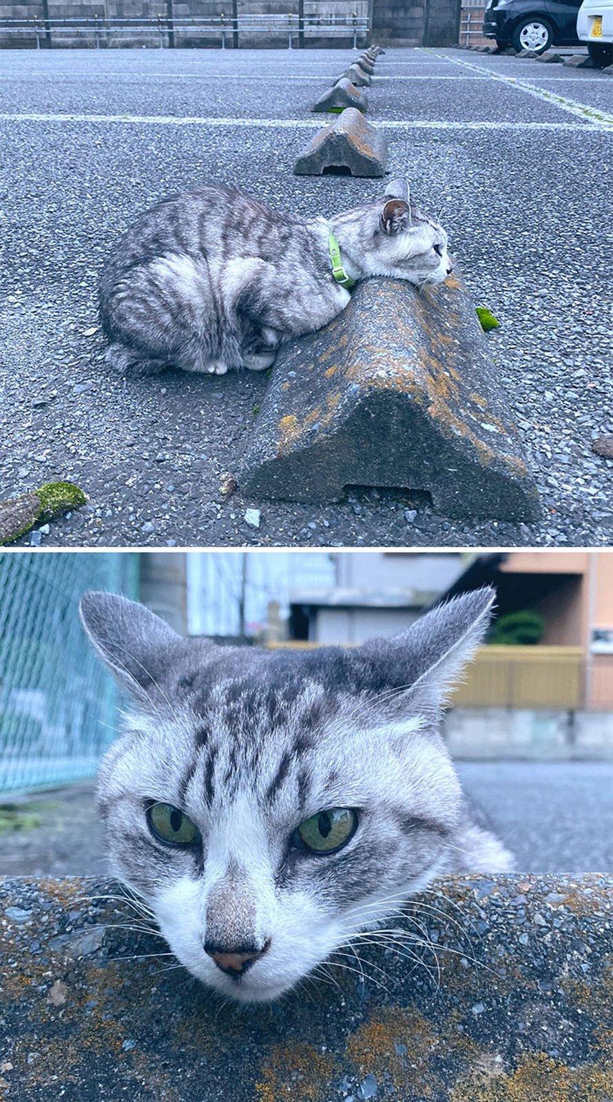 Quelqu'un a remarqué que les chats utilisent les butoirs de stationnement comme oreillers, et 10 personnes ont publié leurs propres photos amusantes