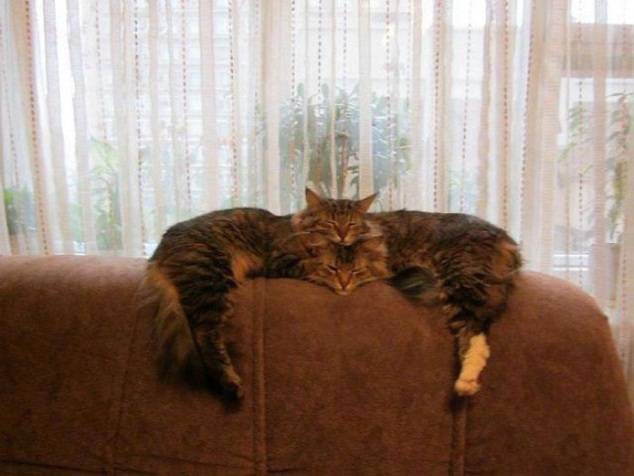 Des gens ont surpris leurs chats en train de dormir ensemble dans les positions les plus étranges