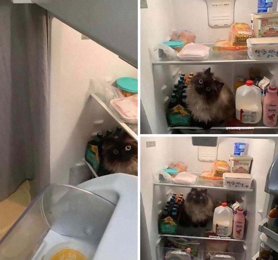 Des gens publient des photos de leurs chats «défectueux» et voici les 22 plus drôles