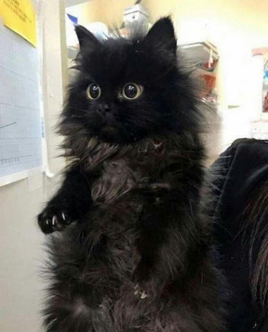 Le groupe «Mitaines meurtrières» s'intéresse aux chats qui exhibent leurs griffes, et voici 22 des plus mignons
