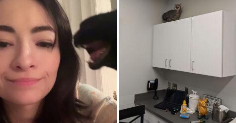 Il existe un groupe où les gens partagent des photos de chats qui miaulent si fort qu'on peut presque entendre les images