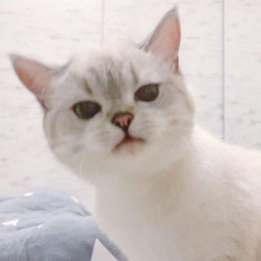 Cette chatte est si expressive qu'elle ressemble à un personnage de dessin animé