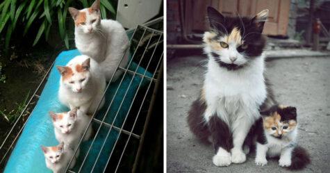 Ces chattes avec leurs mignons petits chatons vont te faire sourire