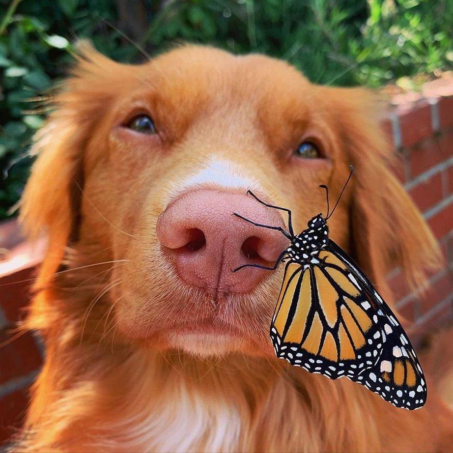Ce gentil chien se lie d'amitié avec tous les papillons qui vivent dans son jardin