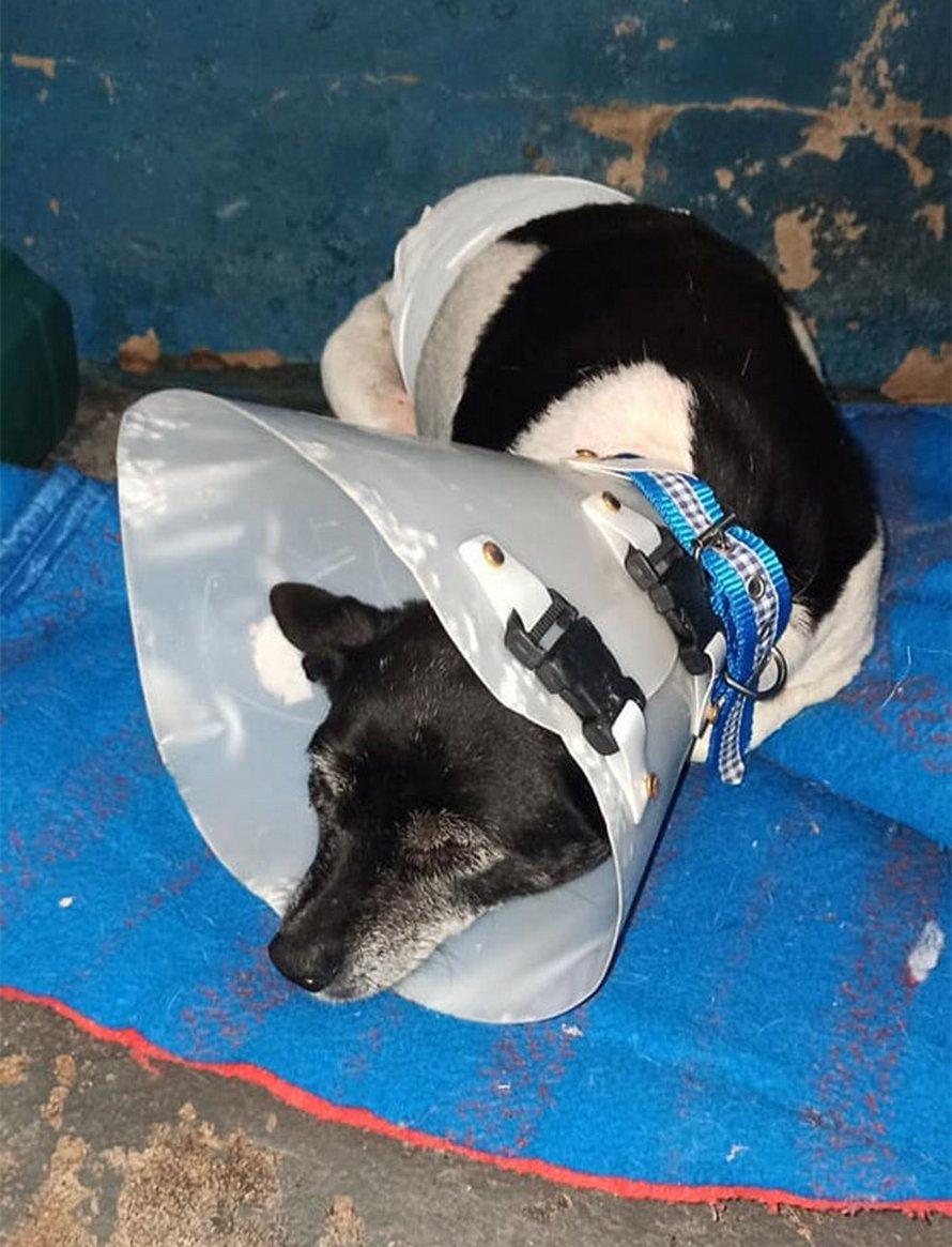 Une chienne souffrant d'une tumeur est jetée dans une benne à ordures comme un déchet