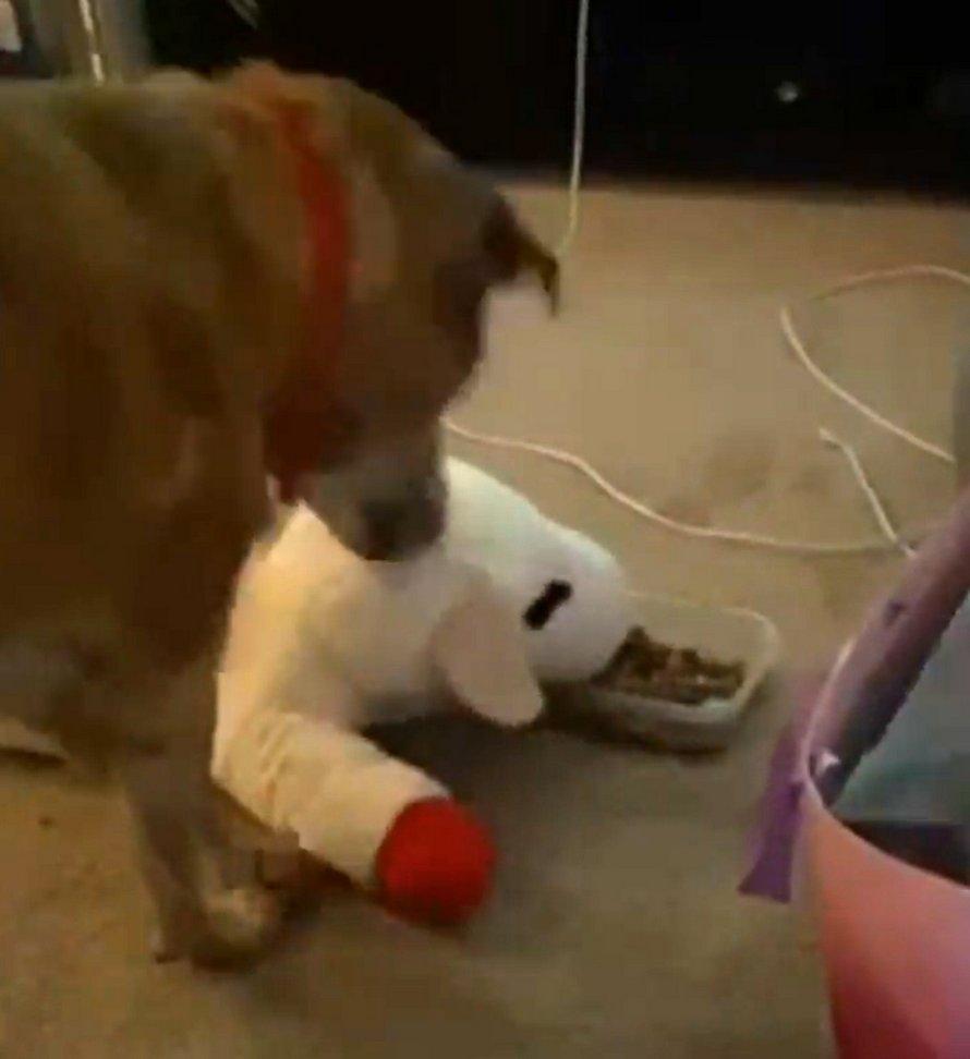 Ce chien s'assure toujours de partager sa nourriture avec son agneau préféré