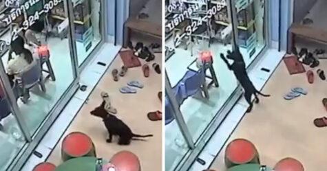 Un chien perdu se rend chez son vétérinaire et demande de l'aide pour rentrer chez lui
