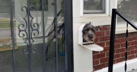 Ce chien a réalisé que la boîte aux lettres est le meilleur endroit pour saluer les voisins