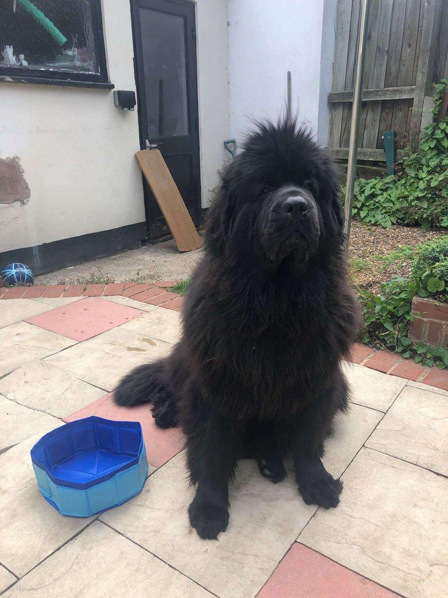 Une chienne est déçue lorsqu'elle reçoit une piscine de la taille d'un bol d'eau commandée par sa propriétaire