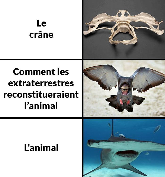 Des gens imaginent à quoi pourraient ressembler certains animaux si des extraterrestres les reconstituaient à partir de leur crâne