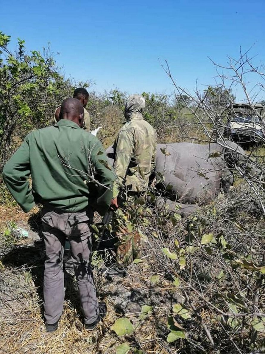 Plus de 350 éléphants sont mystérieusement morts en masse au Botswana