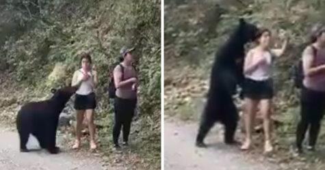 Un ours noir s'approche de randonneuses incroyablement calmes dans ces images à couper le souffle