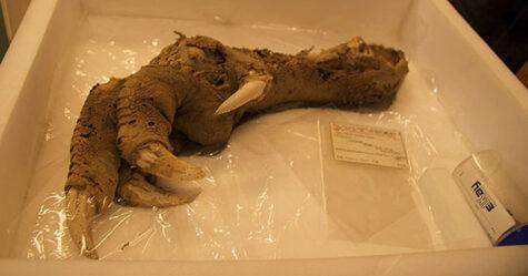 Des archéologues trouvent la griffe d'un oiseau de 3300 ans qui s'est éteint il y a 700 ans et les gens disent que 2020 n'est pas la bonne année pour le cloner