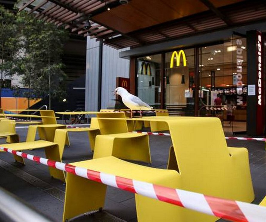 Un homme qui a mordu une mouette qui a essayé de voler son McDonald's a été arrêté par la police