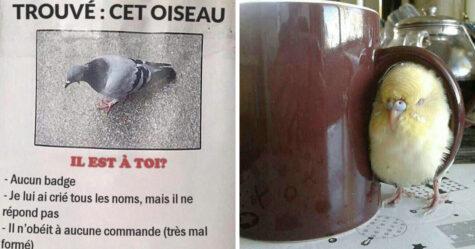 Ces images d'oiseaux avec des messages hilarants sont trop bonnes pour ne pas être partagées