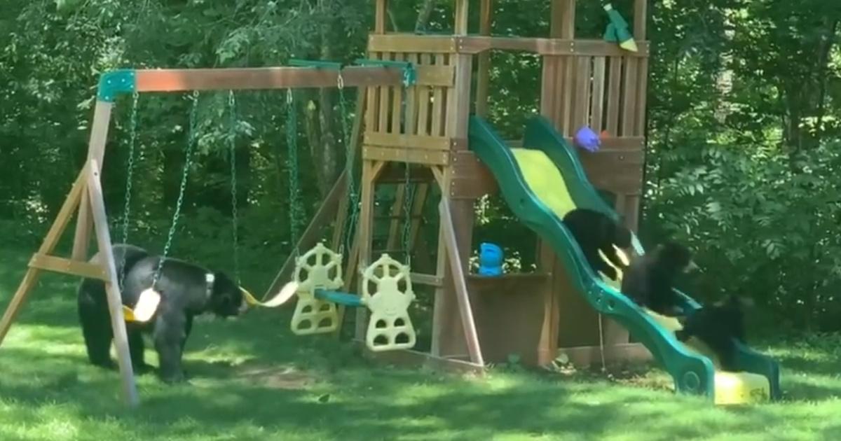 Maman ourse emmène ses 5 adorables petits oursons dans une aire de jeux pour enfants