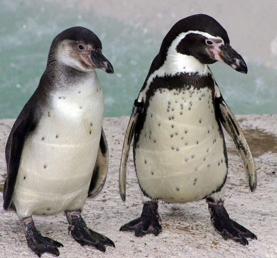 Quelqu'un fait don d'une machine à bulles aux manchots du zoo de Newquay et ils l'adorent