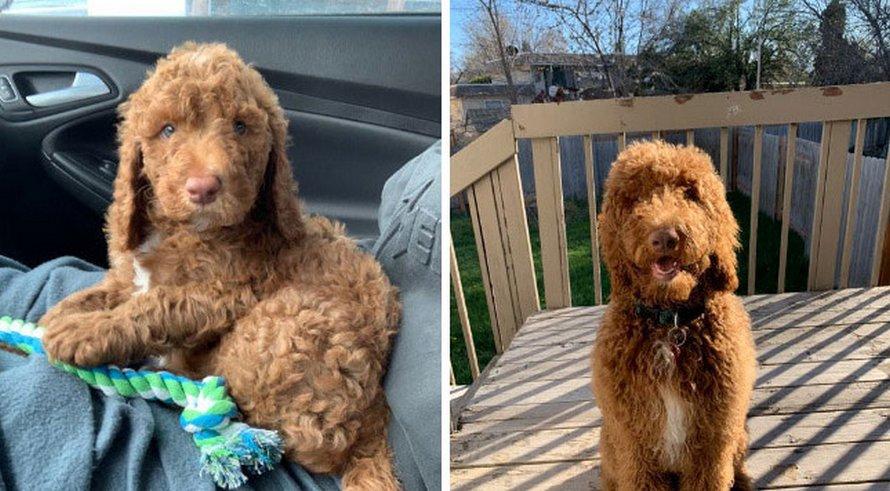 Des gens publient des photos de leurs chiens prises lorsqu'ils étaient chiots et maintenant qu'ils ont grandi