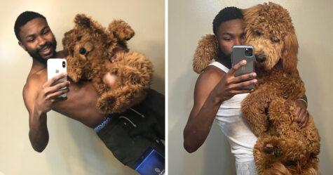 Des gens publient des photos de leurs chiens prises lorsqu'ils étaient de petits chiots et maintenant qu'ils ont grandi