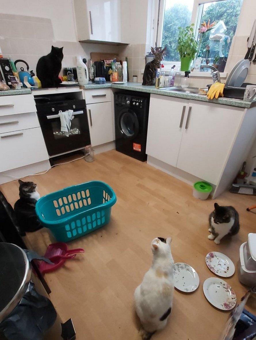 Tu vas adorer ces photos «ma maison, pas mon chat» si tu as déjà rêvé de trouver un chat étrange chez toi