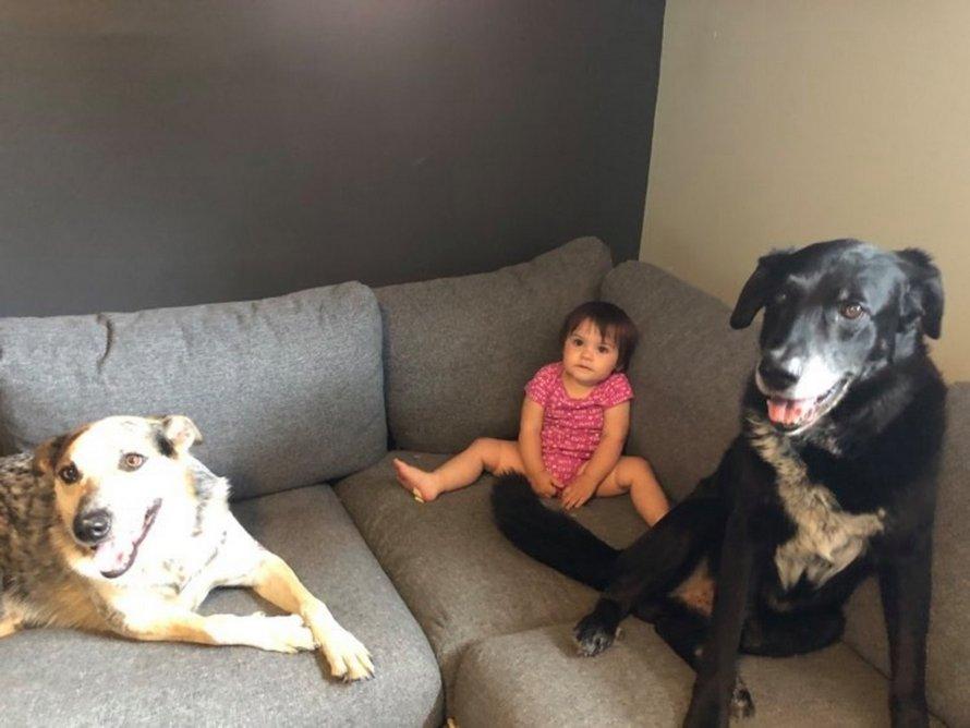 Une petite fille rejoint ses chiens tous les jours pour recevoir une friandise du voisin
