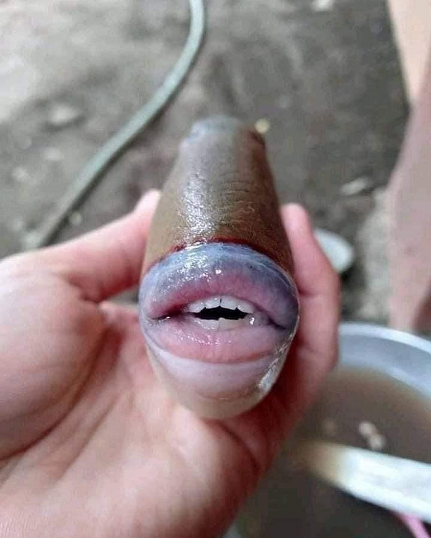 Un poisson étrange avec des dents « humaines » retrouvé en Malaisie