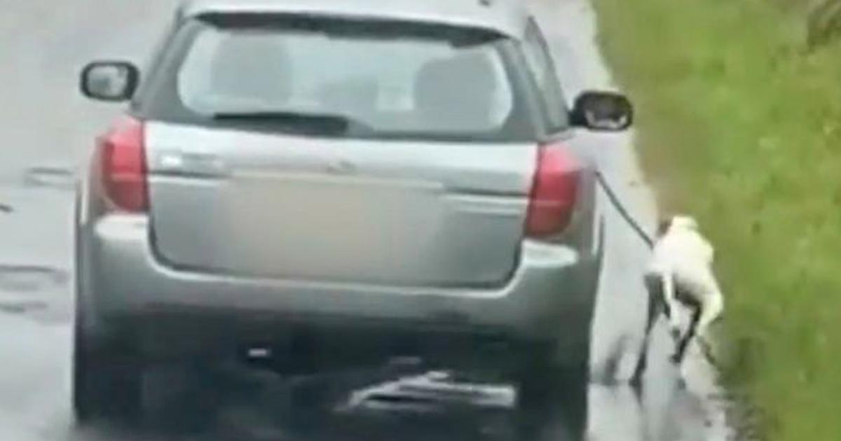 La police recherche un propriétaire de chien cruel qui a fait courir son animal à côté de sa voiture