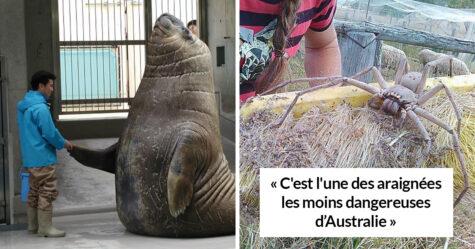 23 photos qui nous rappellent que beaucoup d'animaux sont bien plus gros qu'on le pense