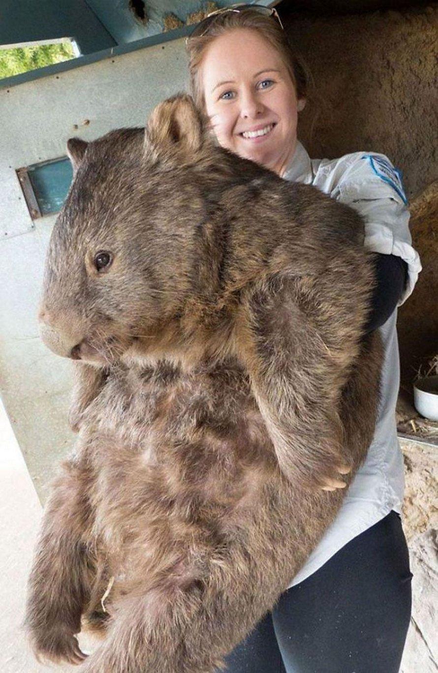 Ces photos nous rappellent que beaucoup d'animaux sont bien plus gros qu'on le pense