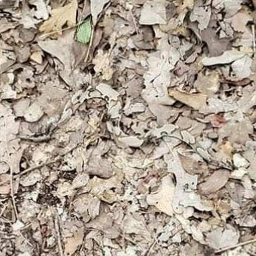 Les gens ont du mal à trouver le serpent sur cette photo en 15 secondes