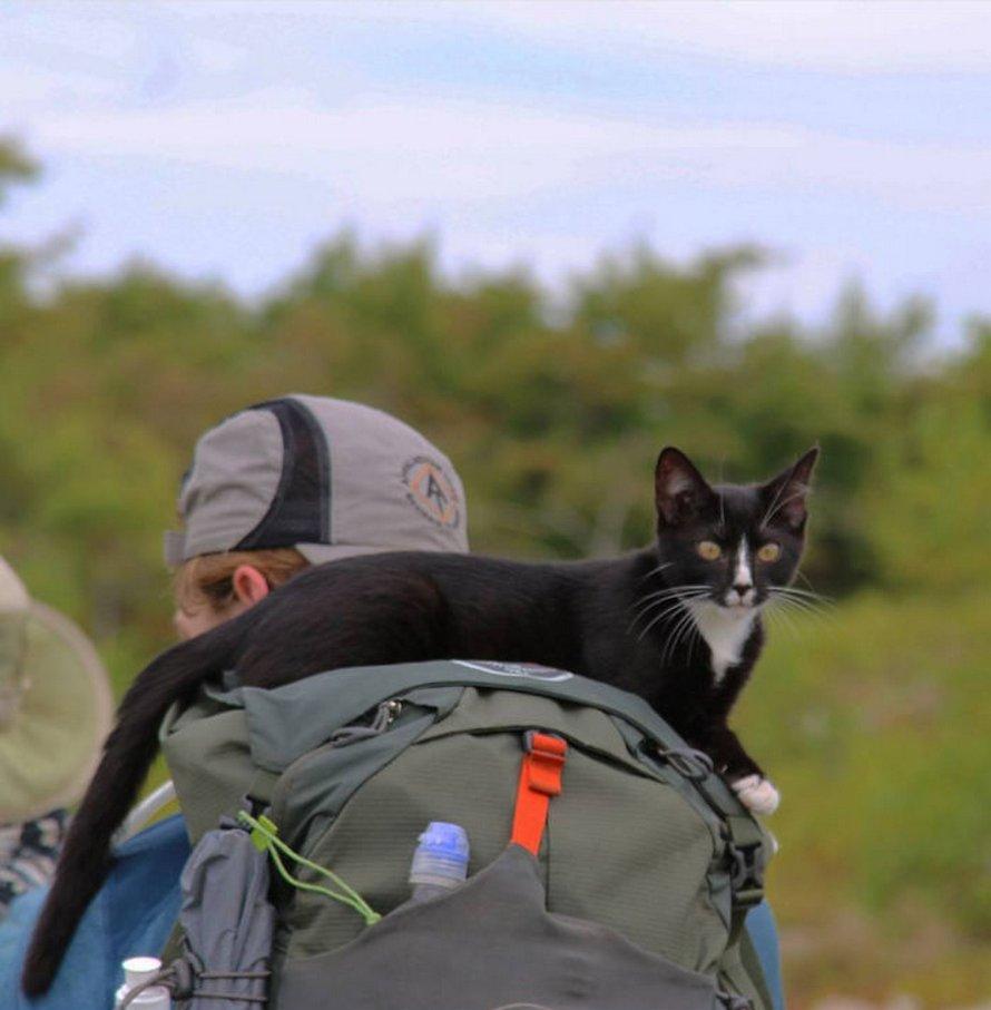 Voici les photos d'animaux de compagnie secourus les plus sympas du mois d'août