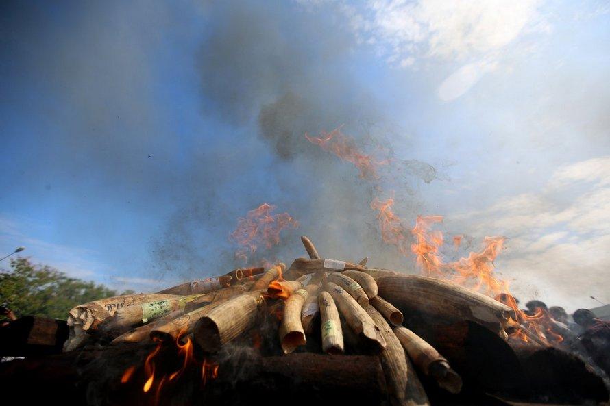 Un braconnier qui a tué plus de 500 éléphants est condamné à 30 ans de prison