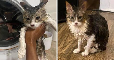 Une femme a envoyé un avertissement choquant après que son chat soit resté coincé dans la machine à laver