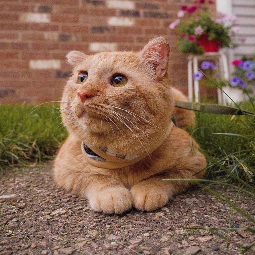 Après avoir convaincu son propriétaire, une femme ramène le plus triste des chats errants chez elle, et un an plus tard, il est méconnaissable