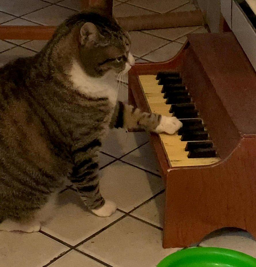 Ce chat joue du piano chaque fois qu'il a faim