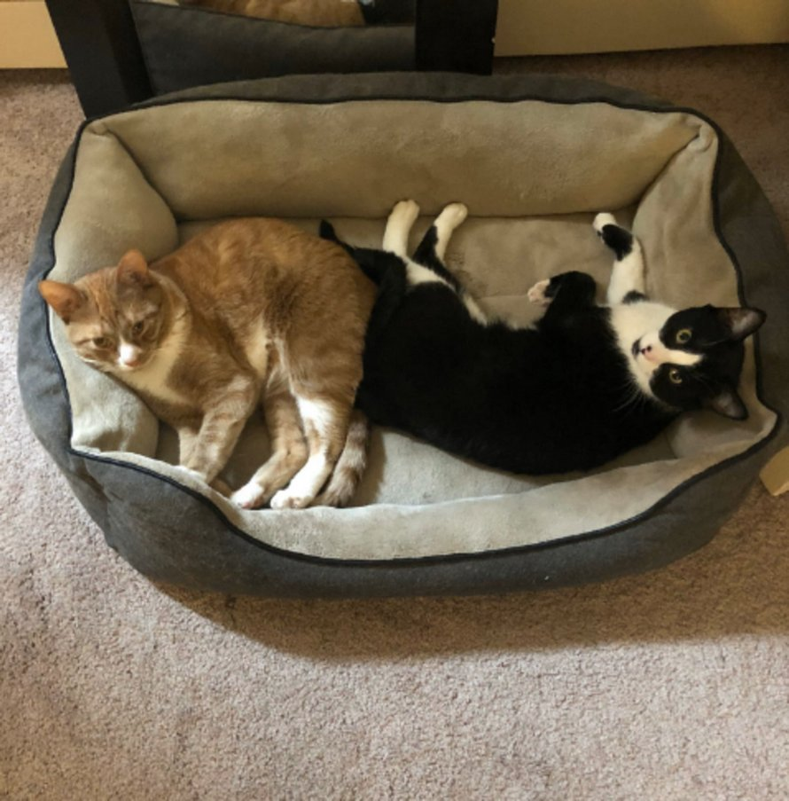 Un chat réconforte son «frère» pendant un orage et ces photos d'eux sont adorables