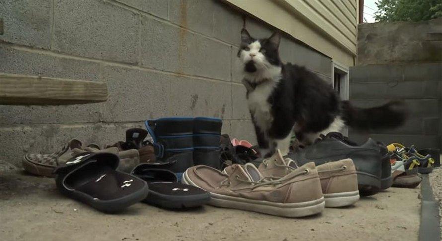 Ce chat aime tellement voler les chaussures de ses voisins que sa propriétaire a même créé un groupe Facebook pour les rendre