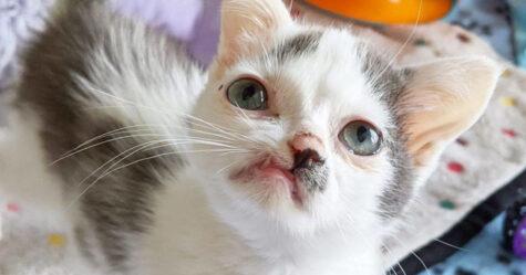 Ce chaton au visage unique veut être aimé par quelqu'un tel qu'il est