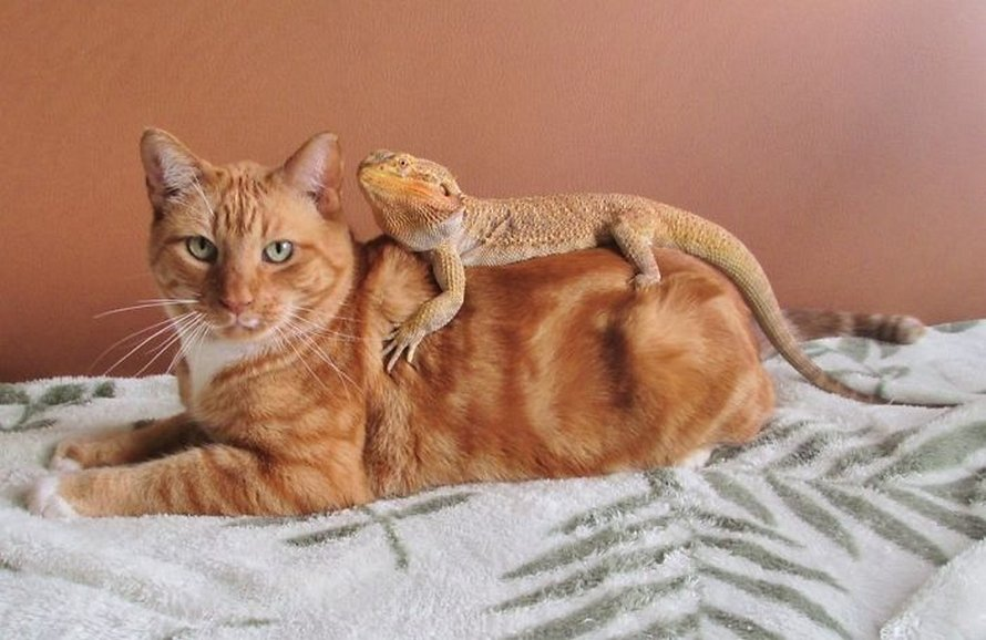 Ces chats qui ont rencontré des lézards vont te faire rigoler