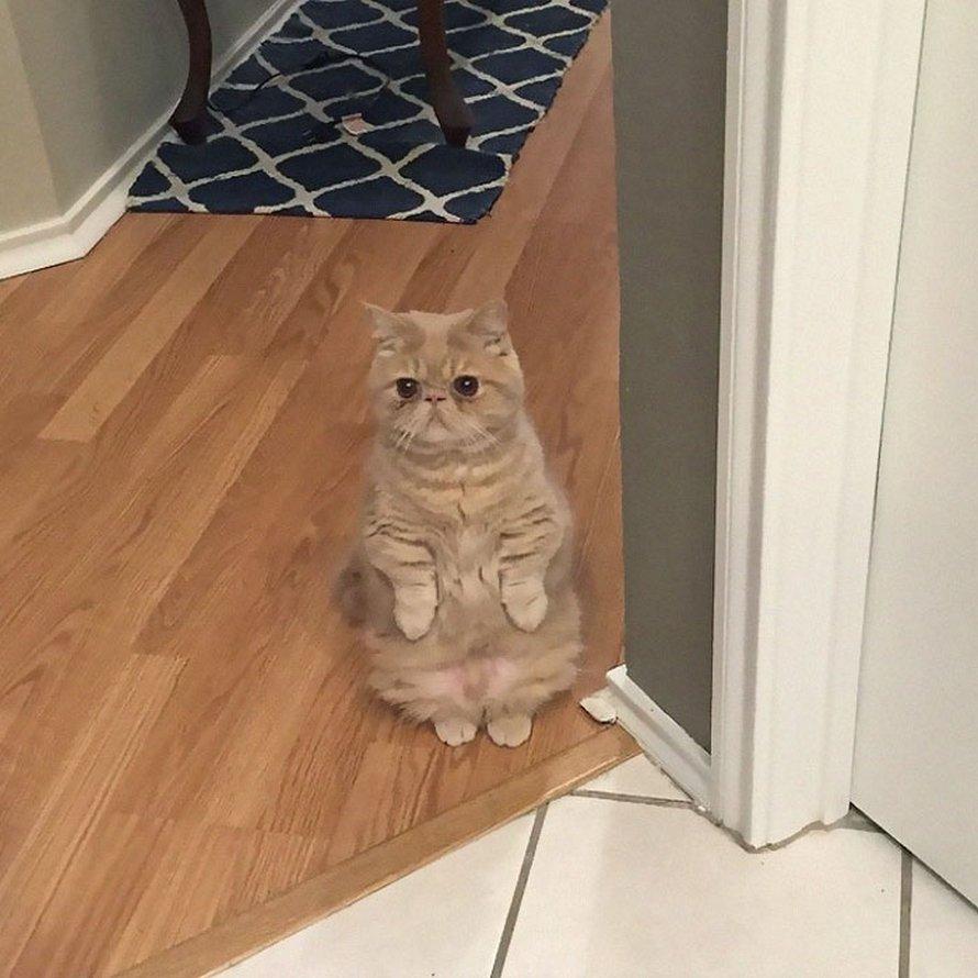 Ces chats qui font semblant d'être des manchots sont mignons et hilarants