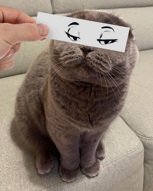 Cet homme place des découpages de visages sur ses chats pour leur donner des expressions farfelues