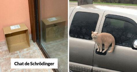 Ces chats ont défié les lois de la physique et ont surpris leurs propriétaires
