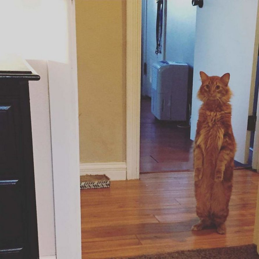 Ces chats mélodramatiques méritent un Oscar ! (photos) By Ipnoze.com Chats-melodramatiques-droles-007
