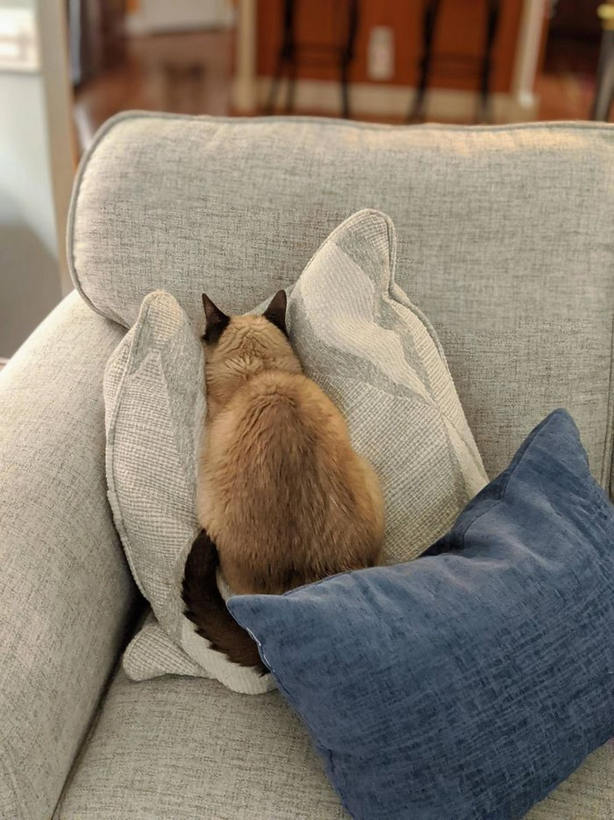 Ces chats mélodramatiques méritent un Oscar ! (photos) By Ipnoze.com Chats-melodramatiques-droles-011
