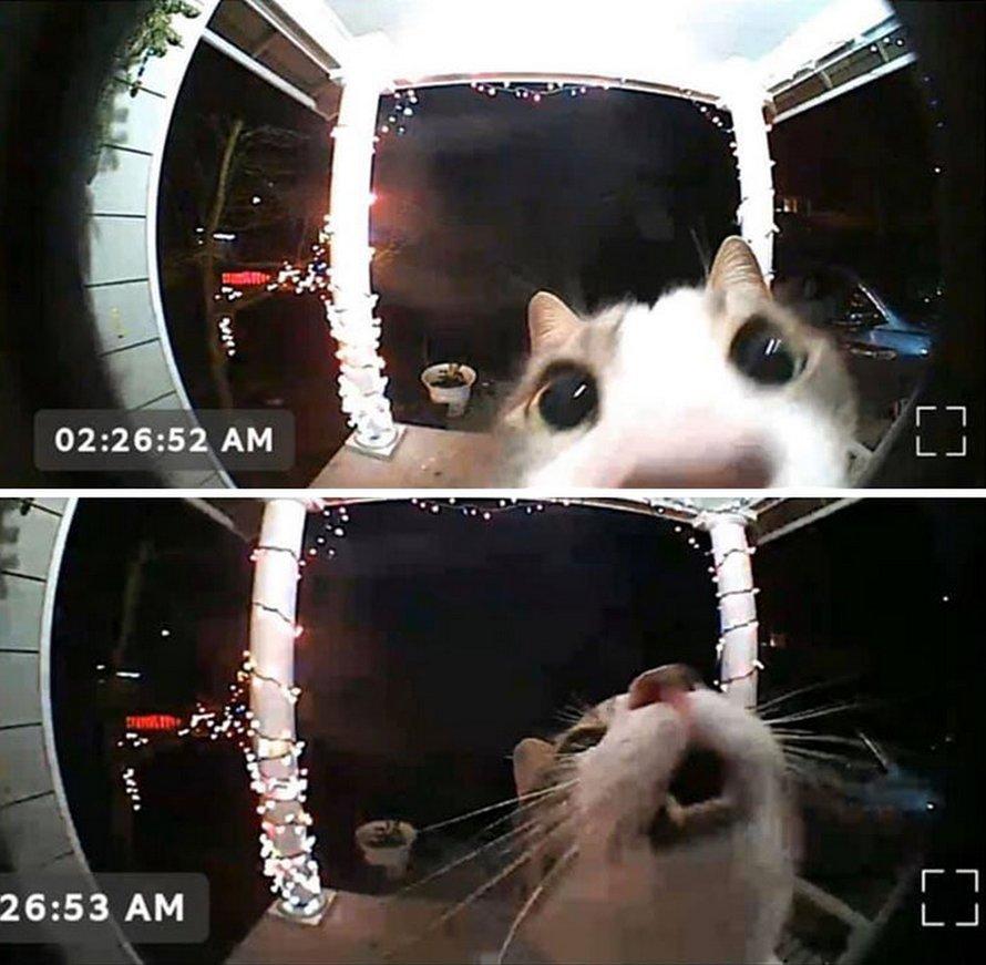 Ces chats mélodramatiques méritent un Oscar ! (photos) By Ipnoze.com Chats-melodramatiques-droles-015