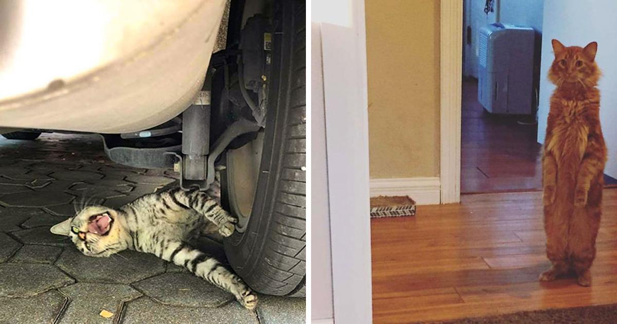 Ces chats mélodramatiques méritent un Oscar ! (photos) By Ipnoze.com Chats-melodramatiques-droles