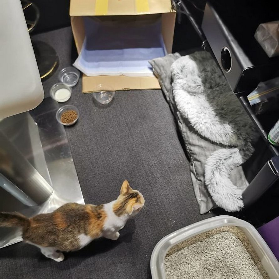 Une femme a emmené cette chatte errante enceinte à son bureau et la famille de 9 chats vit maintenant dans sa propre salle de réunion