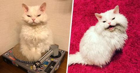 Voici Chirico, une chatte aux expressions faciales sévères qui a toujours l'air de juger les gens
